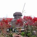 美作の丘の紅葉(2010年11月)