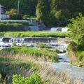 横野川のホタル生息地
