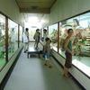 津山めぐり「つやま自然のふしぎ館」「郷土博物館」