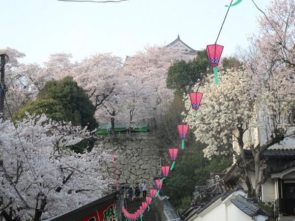 鶴山公園 2012.4.12