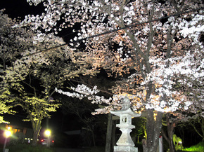shirakami4.jpg