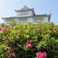 津山城(鶴山公園)のつつじと藤の花