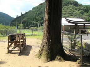 河井木2.jpg