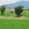 田熊 田んぼの中に祀られている祇園様