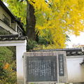 2012年11月14日 長法寺の大イチョウと紅葉