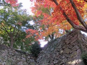 鶴山12.jpg