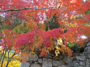 鶴山4.jpg