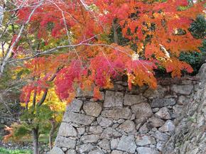 鶴山5.jpg