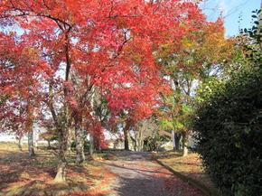 鶴山6.jpg