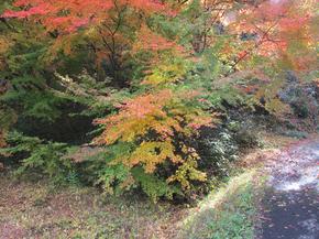 satoyama12.jpg