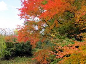 satoyama13.jpg