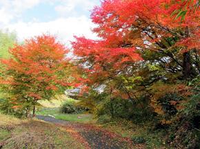 satoyama21.jpg