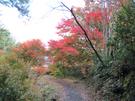 satoyama3.jpg