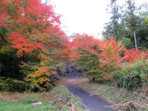 satoyama6.jpg