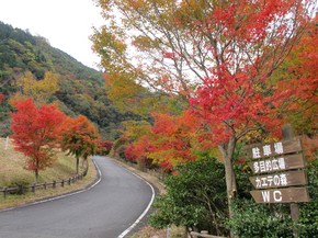 tsugawa13.jpg
