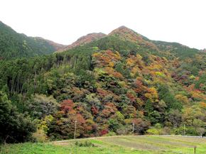 tsugawa5.jpg