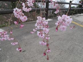 honzanji10.jpg