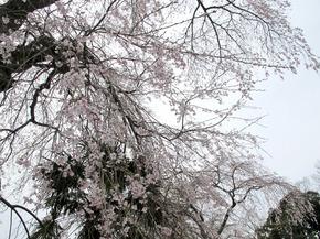 honzanji11.jpg