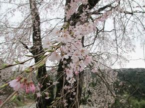 honzanji13.jpg