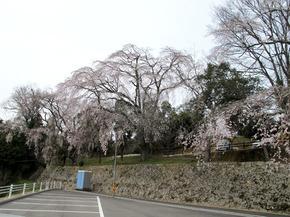honzanji5.jpg