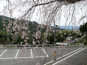honzanji9.jpg