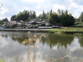 yonei2.jpg