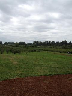 ヴルーベリ 公園