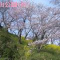 桜の名所「鶴山公園」