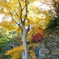 津山城(鶴山公園)の紅葉と「ご当地グルメ・フェスティバル」