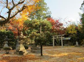 sara_keidai1.jpg