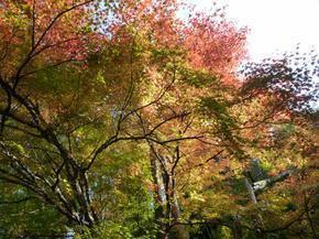 satoyama02.jpg