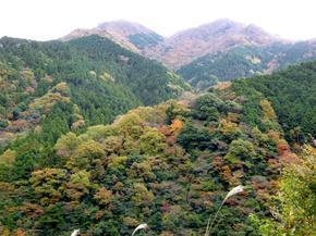 tsugawa1.jpg