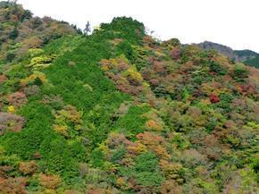 tsugawa10.jpg