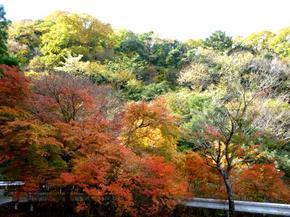 tsugawa18.jpg