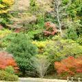 2013年 津川ダム周辺の紅葉