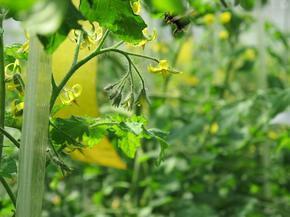 ミツバチ1.jpg
