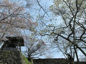 kobu5.jpg