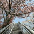 2014年4月19日加茂の金刀比羅宮の展望台