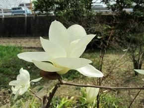 yasuda6.jpg