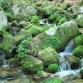 西粟倉村「100年の森林構想」めぐり旅