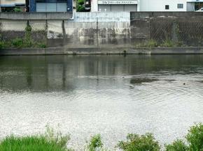 天神橋7.jpg