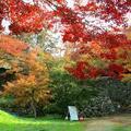 津山城(鶴山公園)のモミジ