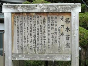 sainoki5.jpg