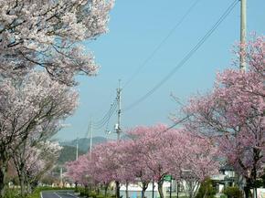 higashi.jpg