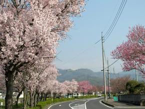 higashi6.jpg