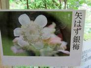 niwa4.jpg