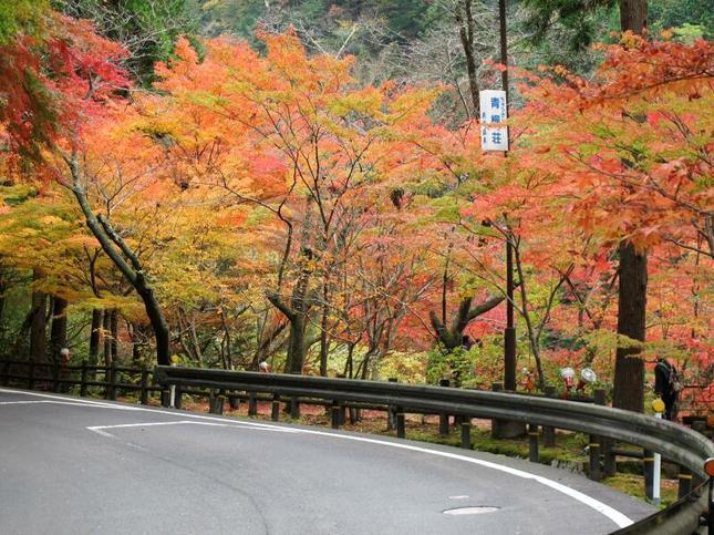 kagamino-8.jpg