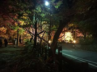 kagamino16.jpg