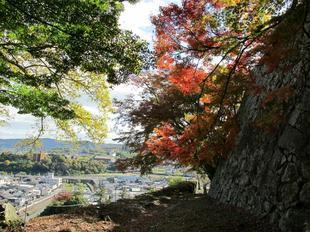 鶴山紅葉29.jpg