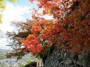鶴山紅葉30.jpg